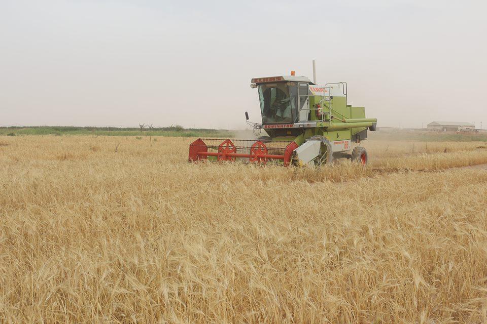 مشروع فدك الزراعي التابع للعتبة العلوية المقدسة يستكمل حصاد (11) طن كناتج من زراعة 80 دونم من المحاصيل العلفية