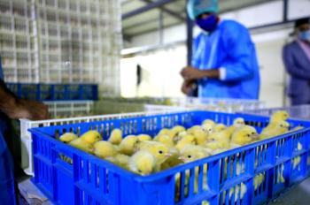 Fayd al-Qassim hatchery is a promising investment projects supporting the local product